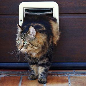 Puerta del gato
